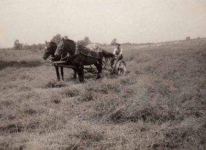 grandpa mowing hay